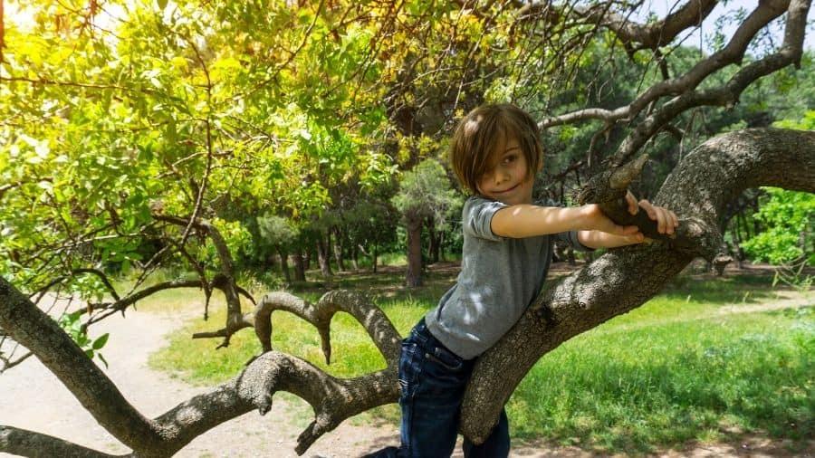 criança na árvore